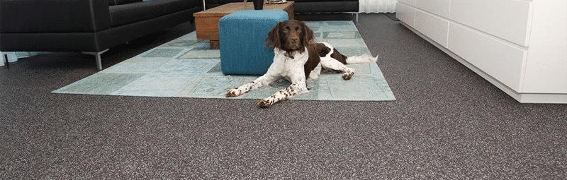 vloeren grindvloeren toepassingen hond